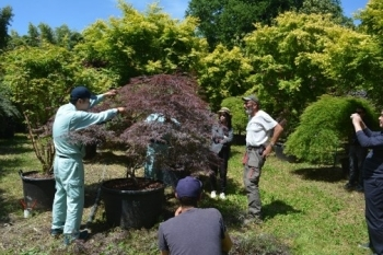 (photo1)Technical guidance on pruning to local gardeners